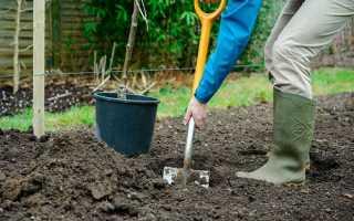 Как посадить яблоню: саженцы, время и место посадки, уход