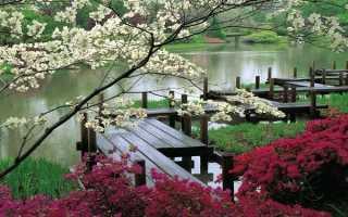Японский сад: 12 секретов аутентичности + фото