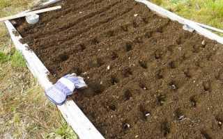 Грядка с чесноком зимой: подготовка почвы осенью перед посадкой, как и чем обрабатывать почву