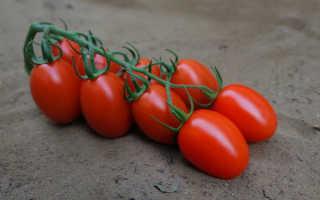 Томат Сибирская тройка: описание, выращивание, отзывы и фото