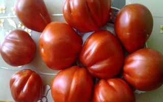 """""""Сто Пудов"""" – стопоцентный выбор любитель больших томатов"""