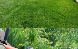 Стрижка газона и уход за кромками. Правила, советы, фото