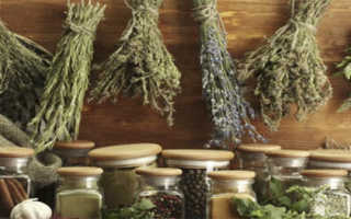 Лечебные травы – полезные свойства и применение