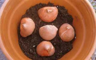 Сорта тюльпанов – как выбрать лучшее, что нужно для хорошего результата, разные способы выращивания