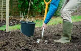 Как посадить грушу весной пошаговое руководство