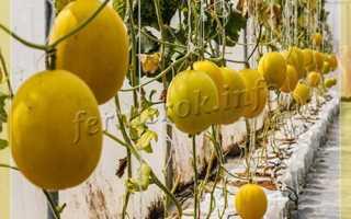 Чем подкормить арбузы в теплице: минеральные удобрения, органика