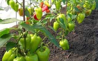Подкормка перца в теплице: какое удобрение и когда использовать