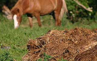 Навоз: как применять натуральные удобрения для питания растений | Коробки ()