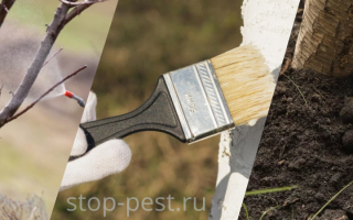 Весенние обработки сада от вредителей и болезней: этапы, правила и меры безопасности