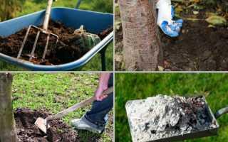 Принципы оплодотворения вишни осень и подбор лучших удобрений для этой цели