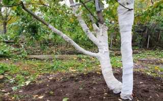 Как ухаживать за яблоней: подкормка, полив, обрезка и побелка