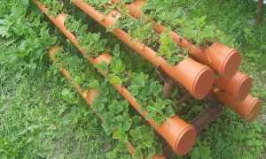 Клубника в трубах: как сделать грядку, посадка, уход