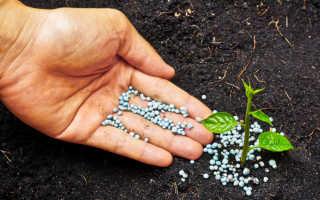 Удобрение для цветов: как удобрять их правильно?