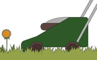 Одуванчики: эффективные методы борьбы с сорняками