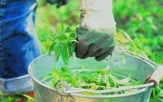 Крапива для томатов: польза, применение, рецепты