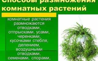 Способы размножения комнатных растений: ОБЗОР!