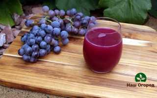 Ягода виноград: советы по выращиванию