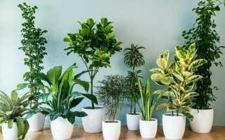 Комнатные растения – переход к весне, уход, полив, пересадка + фото