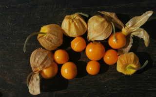 Физалис: как посадить и как ухаживать после посадки в грунт
