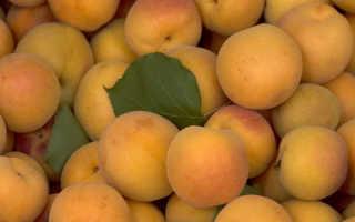 Абрикос это ягода или фрукт – полезные свойства