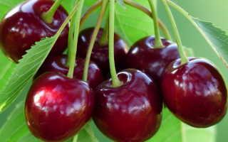 Черешня Аделина: ключевые характеристии сорта, вся агротехника