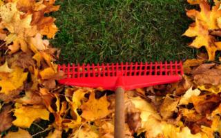 Подготовка зимнего газона – гарантия его обновления