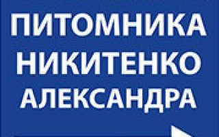 Вишня Заря Татарии: особенности и характеристика сорта + фото