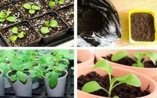 Как посадить петунию на рассаду правильно: разные способы посадки
