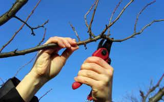 Сезонные работы в саду и на огороде на апрель