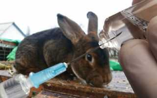 Байтрил для кроликов: инструкция, применение, дозировка