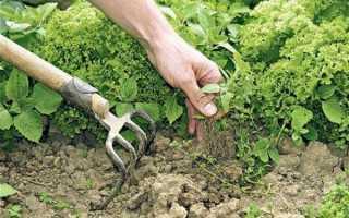 Сорняки: вред и польза для человека и огорода
