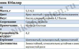 Крыжовник Юбиляр – характеристика сорта и описание, выращивание