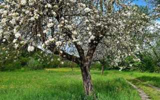 Заболевания яблонь – как их выявить и лечить