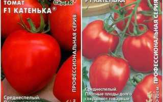 Томат Катенька F1: сортовая характеристика и описание, оценка урожайности и фото