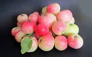 Яблоня грушовка: описание и особенности сорта, посадка и уход