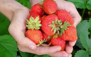 Подкормка клубники в период цветения и плодоношения
