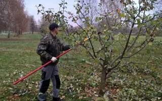 Уход за вишней осенью, цель обработки, основные этапы, а также цель и правила укрытия саженцев на зиму с учетом площади произрастания